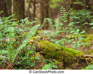 crecimiento, bosque, costero, grueso