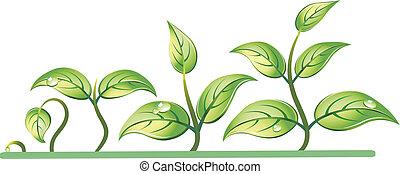 crecimiento, progresión, planta de semillero