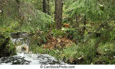 Creek among the firs and pines in the impenetrable forest