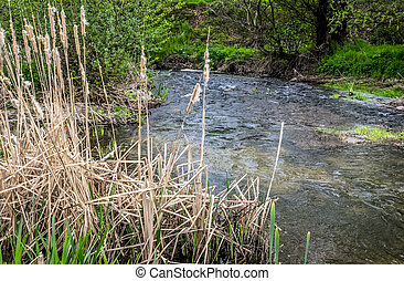 Creek and water plants at spring clody day