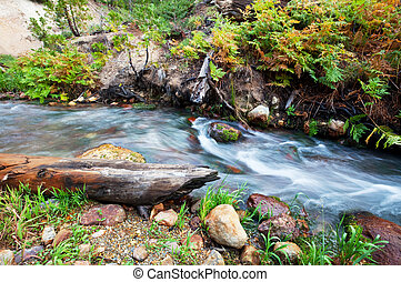 Creek - autumn creek