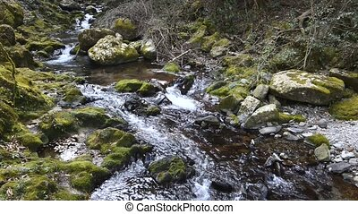 Creek flowing - Small creek flowing between the mossy rocks
