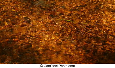 Creek golden color, sunlight abstract background