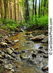 Creek in a Forest - A clear creek in a forest with pine ...