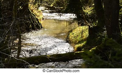 Creek in a German forest in s soft spring light