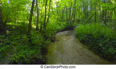 Creek in a summer forest