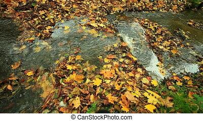 Creek in autumn forest. Full HD