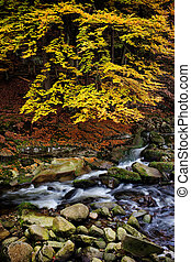 Creek in Autumn Mountain Forest