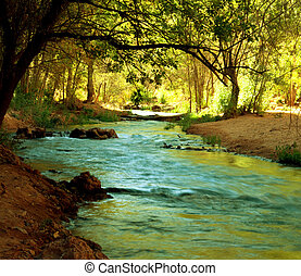 Creek in forest - creek in forest