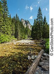 Creek in mountais