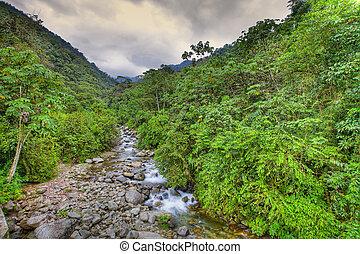 Creek in rainforest