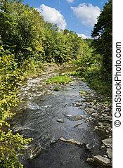 Creek in Summertime