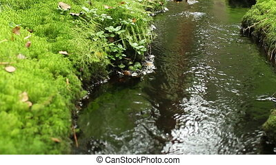 creek in the green forest foreground