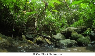 Creek in the rain forest of South East Asia. 4k Ultra HD ...
