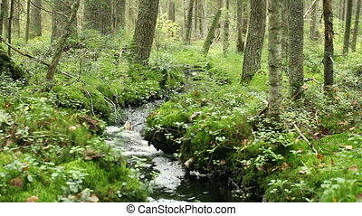 Creek in wild forest - Creek in an impenetrable wild forest...