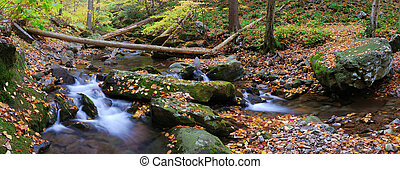 creek panorama with tree branches in forest - Autumn creek ...