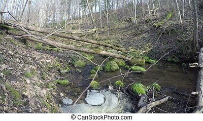 creek ripple in forest