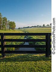 Creek Through Horse Country