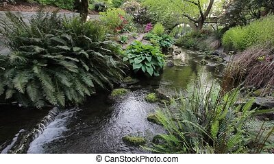 Creek with Ferns and Hostas 1080p - Ferns and Hostas Plants...