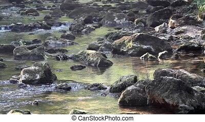 creek with rocks