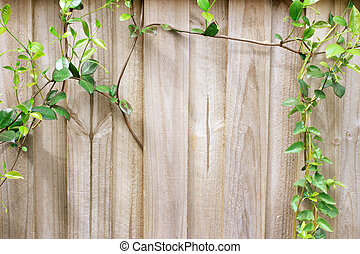 Creeper Plants on Wooden Fence