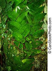 Creeping vines in jungle