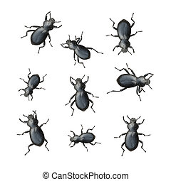 Creepy Crawly Black Beetles On A White Background