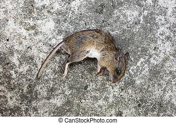 creepy dead rat