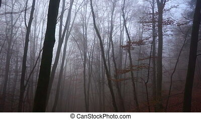 Creepy Forest - Creepy foggy autumn forest for Halloween and...