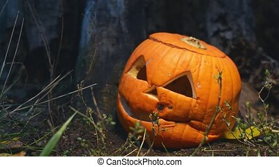Creepy holiday pumpkin covered with mold near an old wooden stump is lit by a bright light that moves in different directions. Closeup of a jack-o-lantern with a lid lying in the grass cooked for Halloween. Food over production.