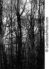 creepy spooky woods with smoke