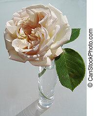 cremoso, rosa