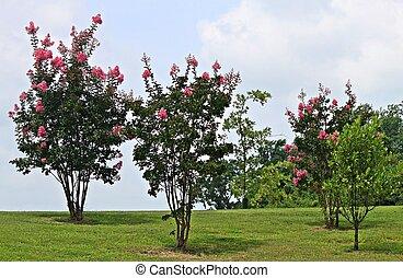shot of Crepe Myrtle trees on grassy hill