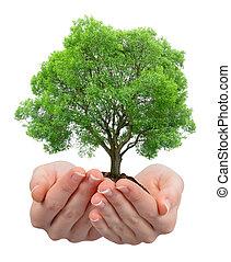 crescendo, árvore, em, mãos