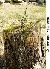 crescendo, árvore, natal, tronco