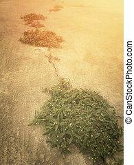 crescendo, através, erva daninha