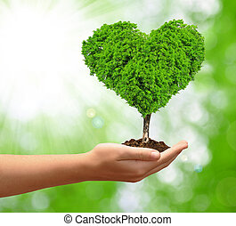 crescendo, coração, árvore, forma