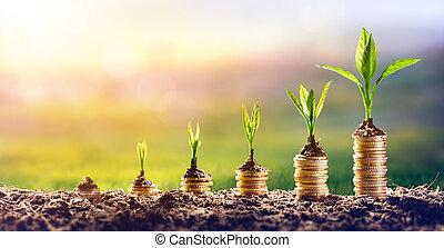 crescendo, dinheiro, -, planta, ligado, moedas, -, finanças, e, investimento, conceito