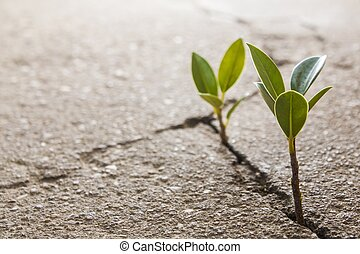 crescendo, erva daninha
