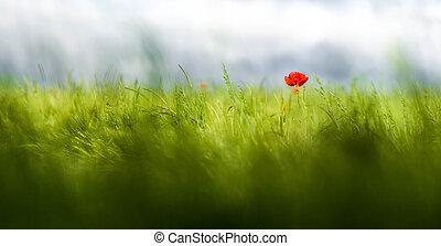crescendo, erva daninha, campo, aveia, sozinha, vermelho