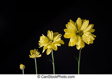 crescendo, isolated., flores, vida