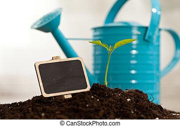 crescendo, planta