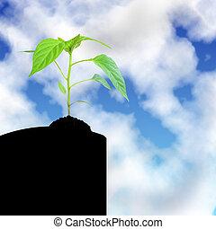 crescendo, planta, céu