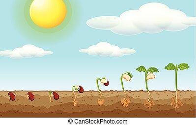 crescendo, planta, de, semente, em, a, chão