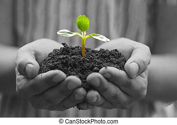 crescendo, planta, hands., natureza, exterior, seu