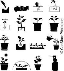 crescendo, planta, jogo, ícones