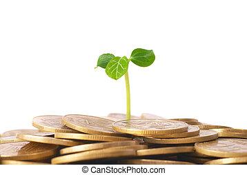 crescendo, planta, moedas, verde