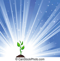 crescendo, planta verde, azul, estrela, fundo, como, um, símbolo, de, natureza, proteção