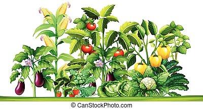 crescendo, plantas, legume fresco, jardim