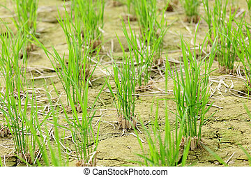 crescendo, solo, saída, verde, seedling
